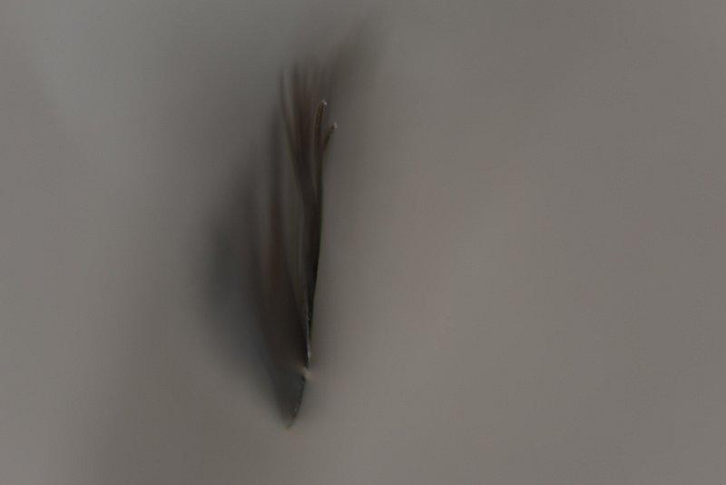 DSC-0731-1-web.jpg